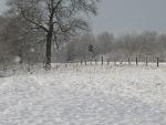 Schneelandschaften 9