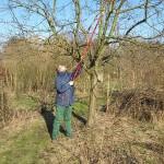 Harald beim Schneiden unserer Obstbäume