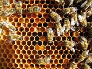 Frischer Pollen