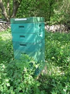 Bienenvolk mit 3 Honigzargen