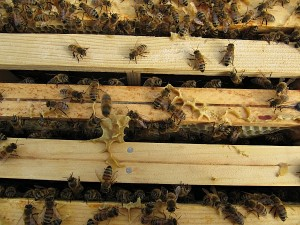 Aufgesetzer Honigraum