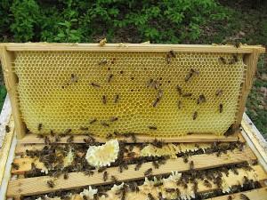 Ausgebaute Honigwabe