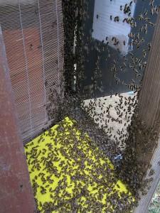 Eingang Bienenschaukasten