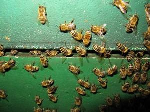 Honig trocknen