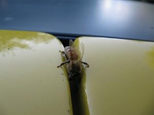 Räuberei am Auto - Ich will meinen Honig zurück!