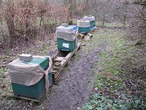 Halbleerer Bienenstand