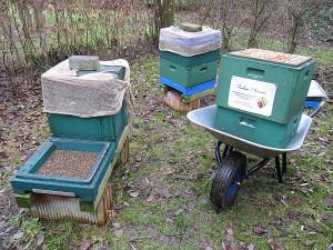 Abräumen der toten Bienenvölker