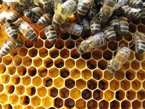 Erste Pollen