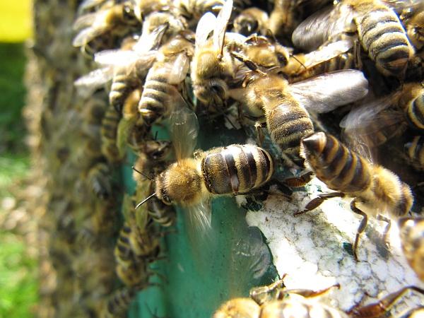 koch imkereibedarf und honig oppenau