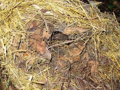 Igelkuppel mit Mäusenest