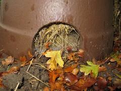 Spinnenweben vor der Igelkuppel