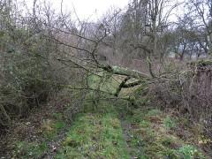 Umgestürzter Baum versperrt den Weg