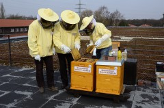 Bienen auf Zeche Zollverein (6392)