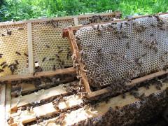 Erster Honig 2013 (0934)