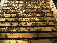 Volle Bienenkästen (0963)